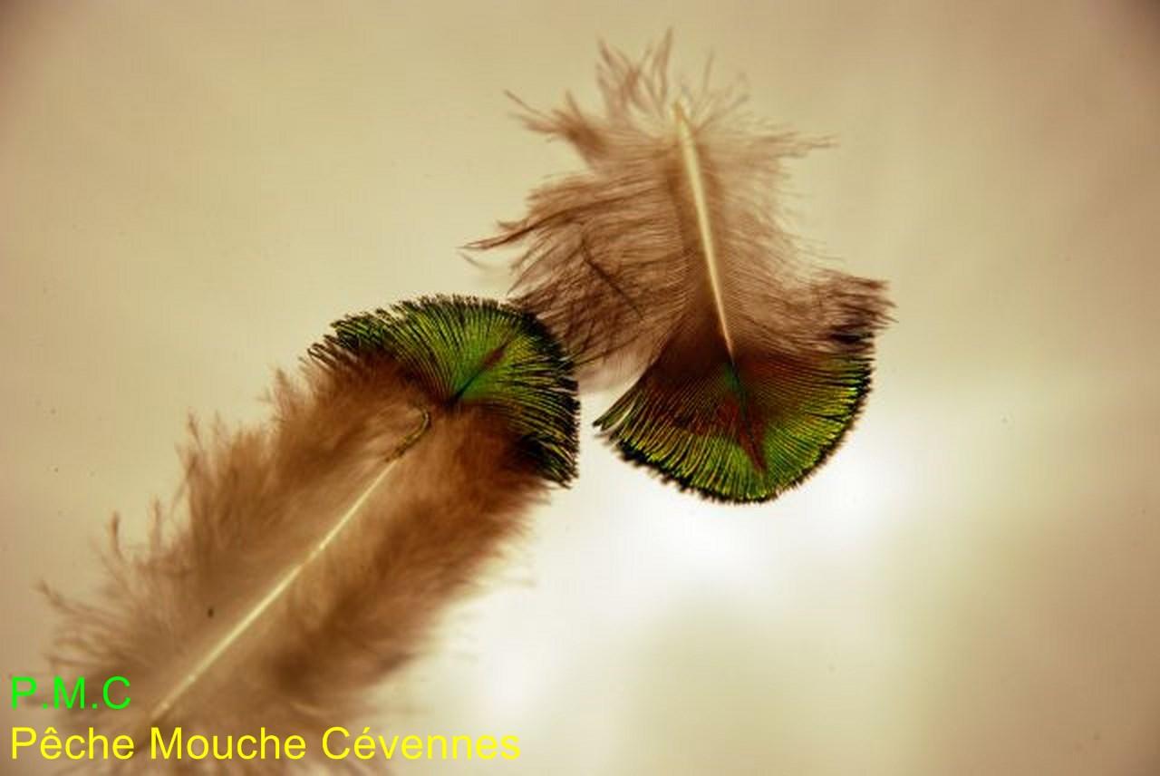 La mouche verte ou mouche g n pi peche la mouche en cevennes de la truite la carpe - Invasion de mouches vertes ...